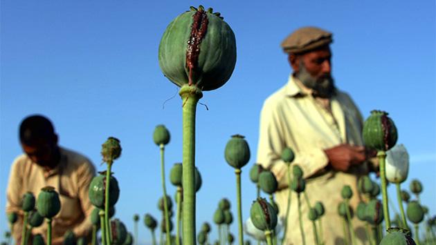 Afganistán: terrorismo, opio y paciencia