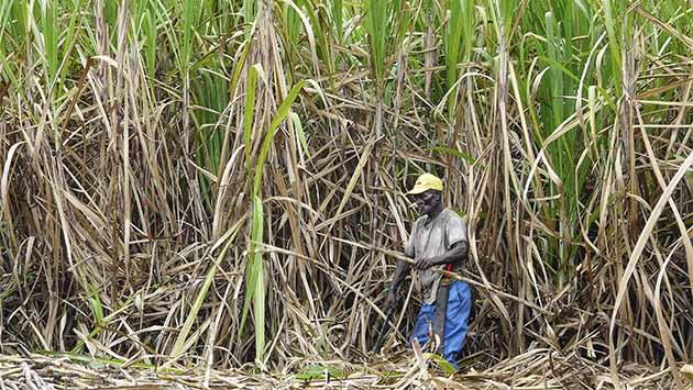Seis destinos del Caribe. (V) República Dominicana: Contra el tópico